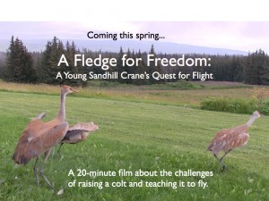 Fledge for Freedom film