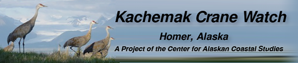 Kachemak Crane Watch